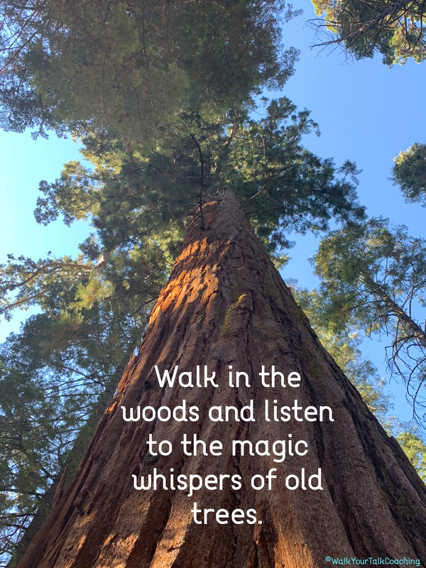 Image result for Images of trees with quotes